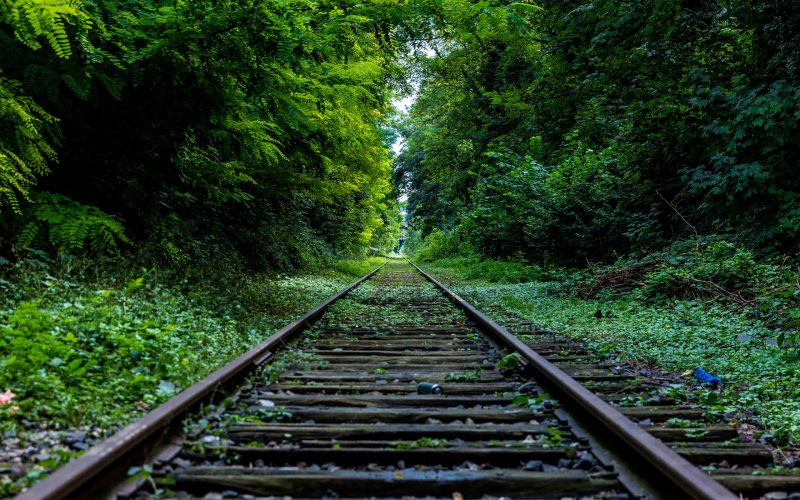 railroad tracks through green forest