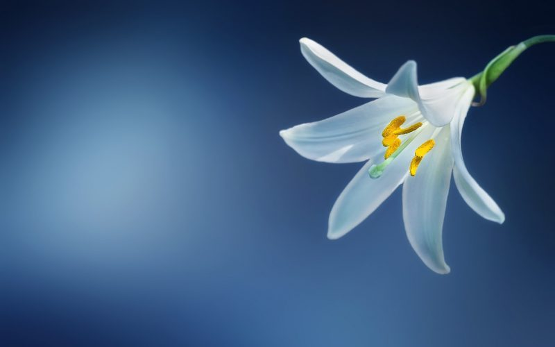 consider the lilies scripture and music